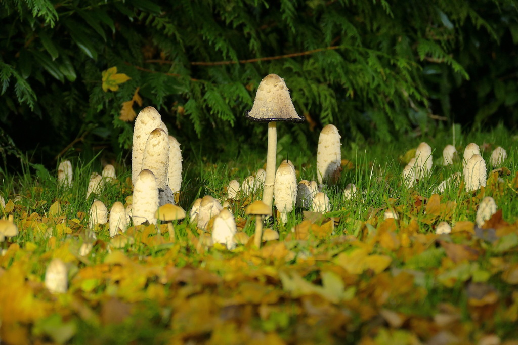 March of the Mushrooms